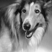 Dog movie