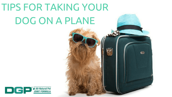 Can You Bring Dog Food On A Plane