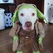 Walloda in Costume