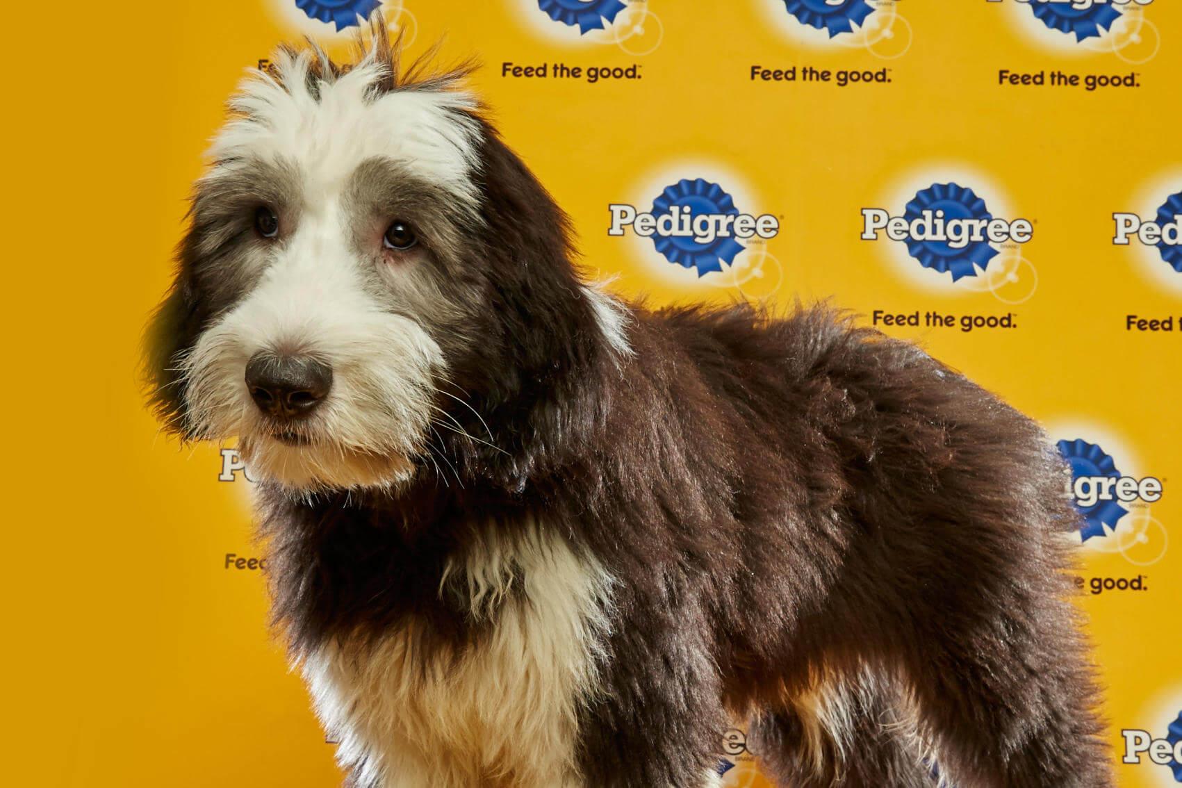 Florida Little Dog Rescue