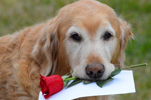 How To Treat Your Dog On Valentineu0027s Day