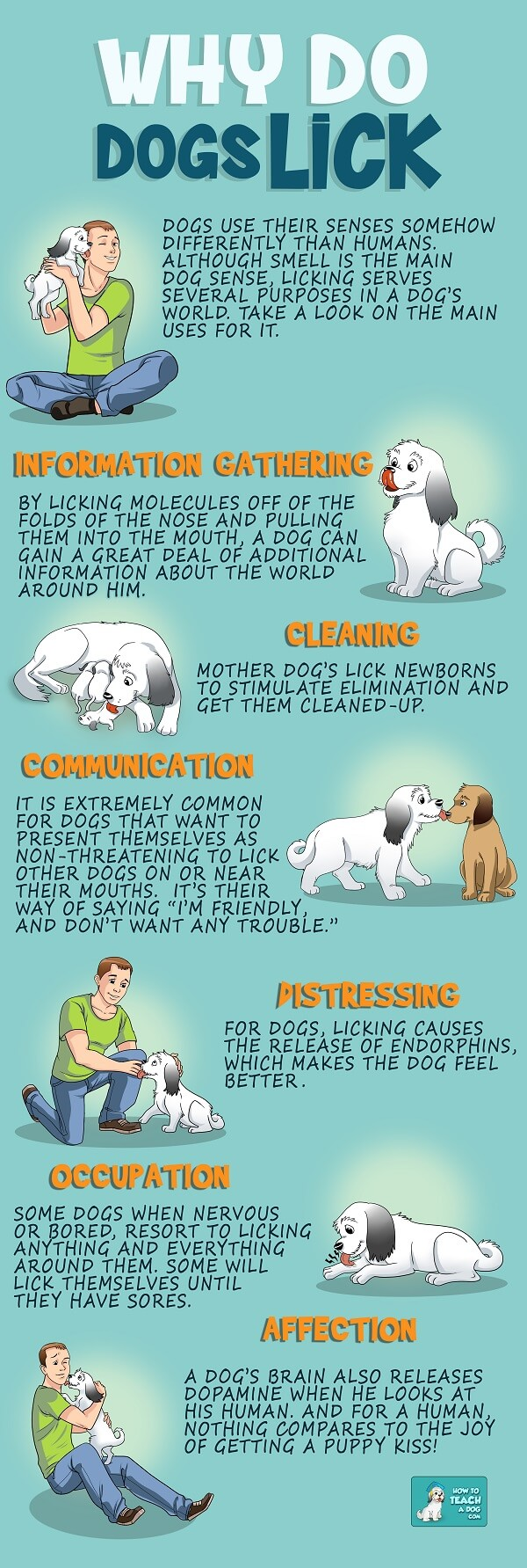 Credit http www howtoteachadog com why do dogs lick your face