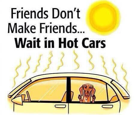 What To Do If A Dog Is Left In A Hot Car Dgp For Pets