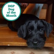 may dog of the month
