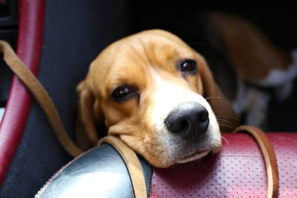 How To Prevent A Dog From Getting Carsick