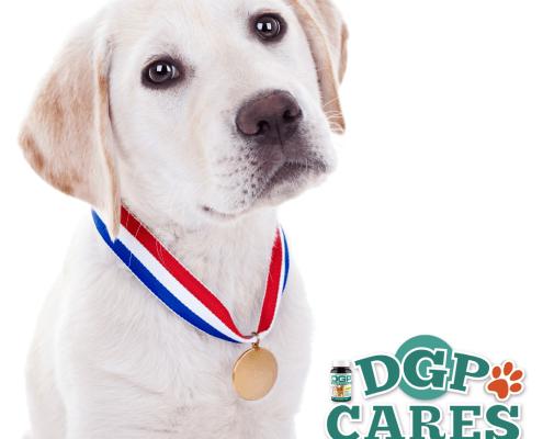 DGP Cares 2016 winners blog