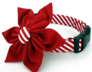 christmas-dog-collars-zkcvb5oq
