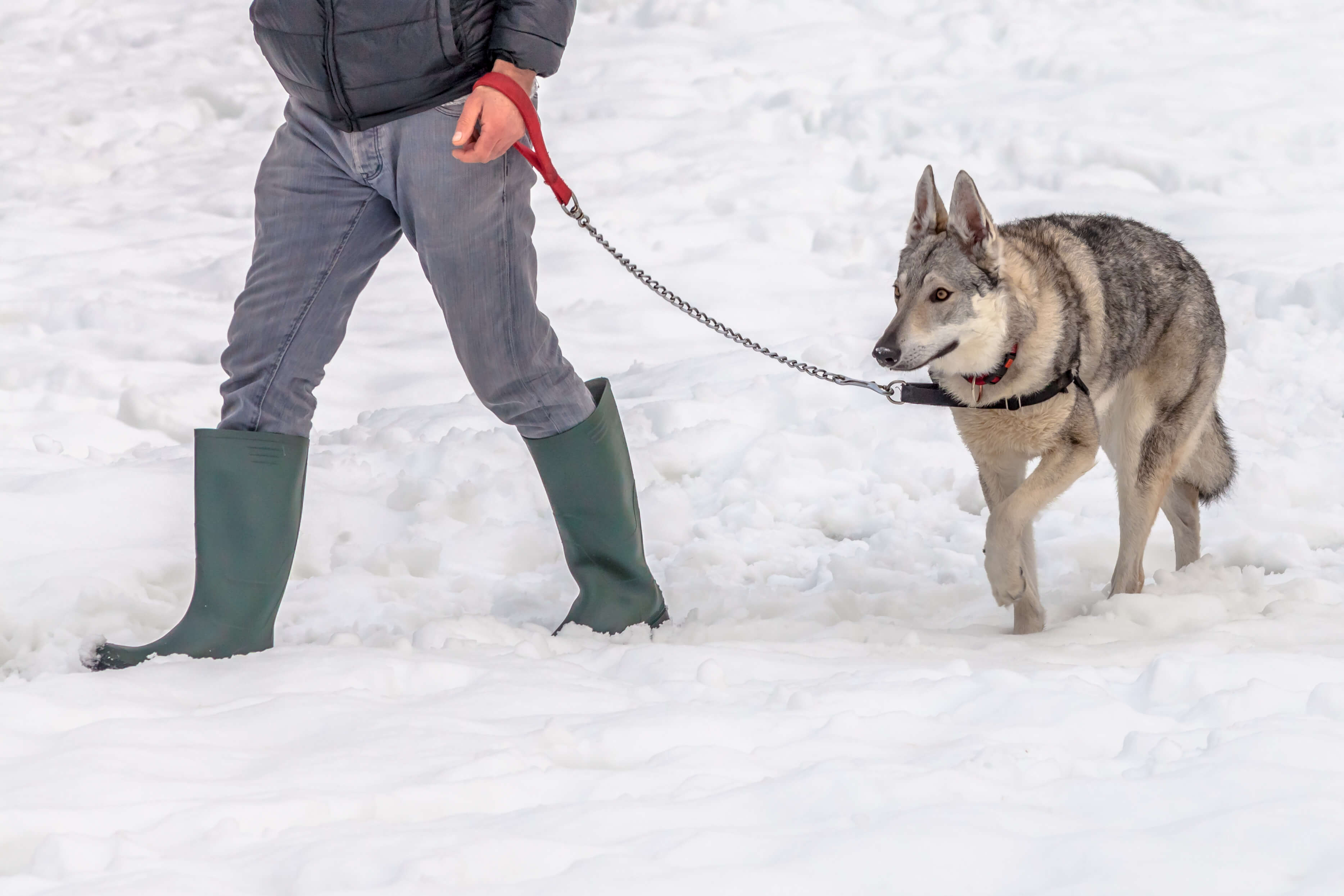 How Cold To Walk Dog