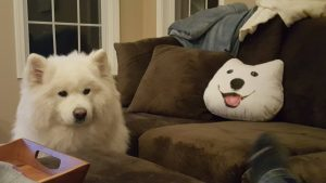 Kenji on Couch