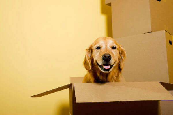 Pet Safety Moving Day Edition Dgp For Pets