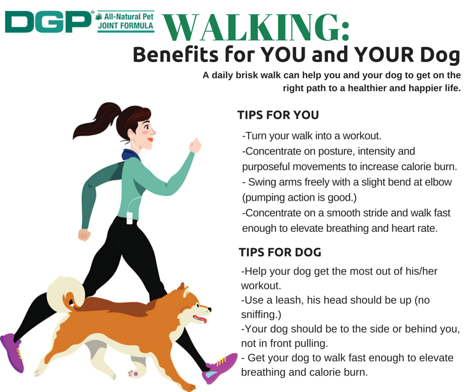 Physical Benefits Of Walking Your Dog