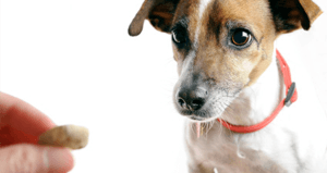5 Summertime Treats That Could Hurt Your Dog