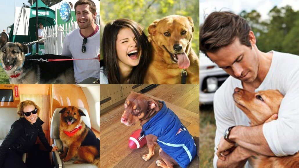 Celebrity Dog Lovers Dish The Dirt - Fidose of Reality