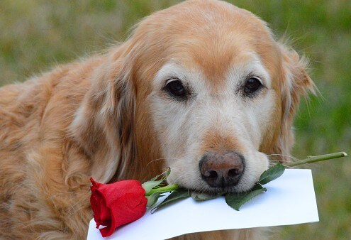 Valentine S Day Dog Treats Archives Dgp For Pets