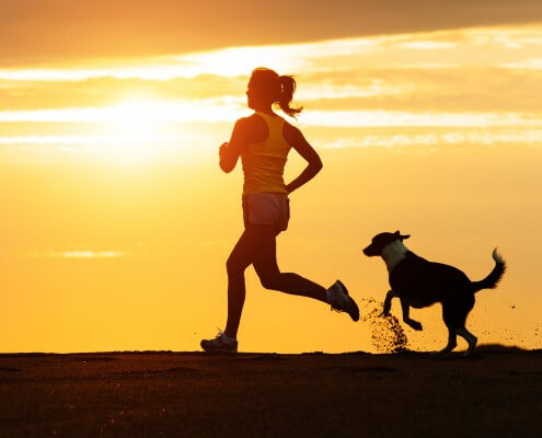 traveling and workout tips for dogs