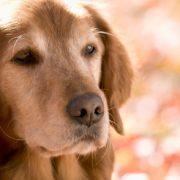 senior dog behaviors explained