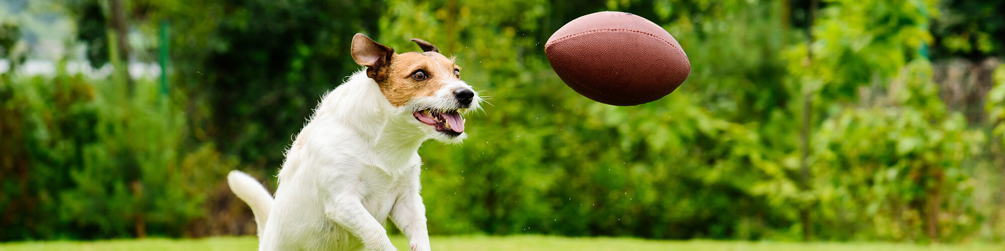 dog with football dgp
