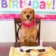 5 Preventative Health Measures to Help your Dog Live Longer