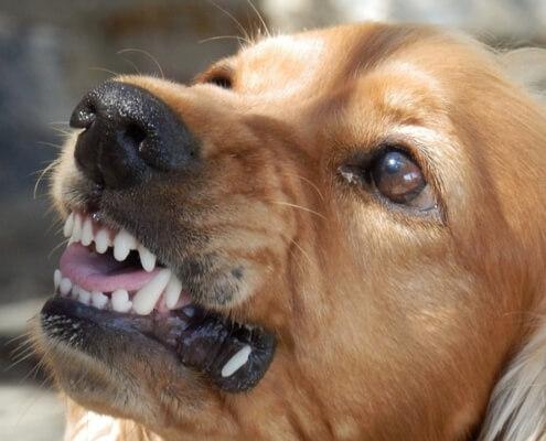 dog to dog aggression